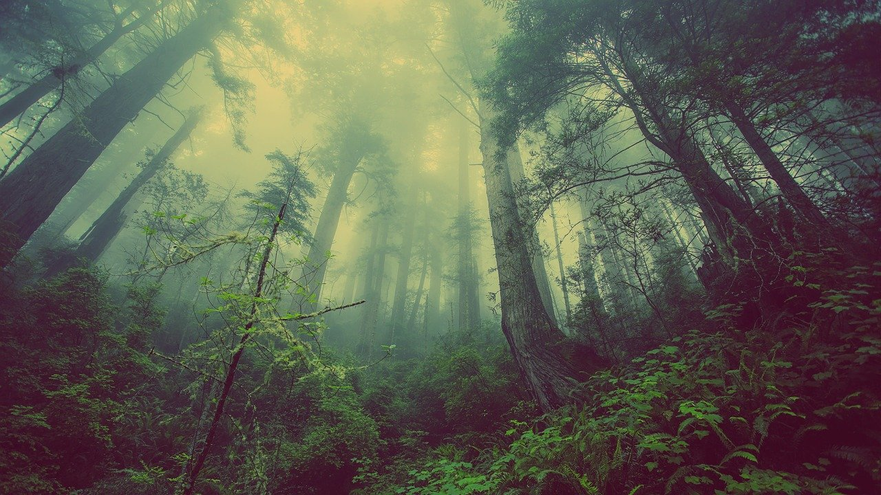 Forest Mist Nature Trees Mystic